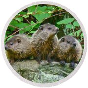 A Trio Of Trouble   Round Beach Towel by Mother Nature