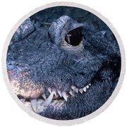 African Dwarf Crocodile Round Beach Towel by Dante Fenolio