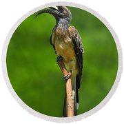 African Grey Hornbill Round Beach Towel by Tony Beck