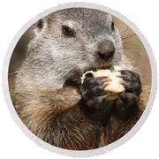 Animal - Woodchuck - Eating Round Beach Towel by Paul Ward
