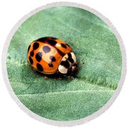 Asian Multicolored Lady Beetle Round Beach Towel by Science Source