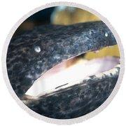 Chinese Giant Salamander Round Beach Towel by Dante Fenolio
