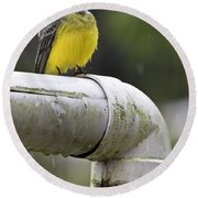 Grey-capped Flycatcher Round Beach Towel by Heiko Koehrer-Wagner