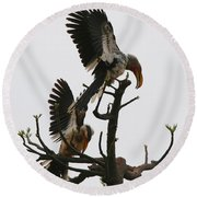 Hornbill Courtship Round Beach Towel by Bruce J Robinson