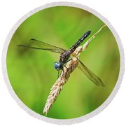Round Beach Towel featuring the photograph Meadowhawk by Rodney Campbell