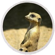 Meerkat Mother And Baby Round Beach Towel by Carolyn Marshall