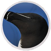 Razorbill Portrait Round Beach Towel by Tony Beck