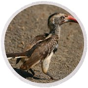 Red-billed Hornbill Round Beach Towel by Bruce J Robinson
