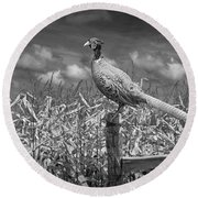 Ringed Neck Pheasant On A Fencepost By A Cornfield Round Beach Towel by Randall Nyhof