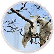 Sulphur Crested Cockatoos Round Beach Towel by Kaye Menner