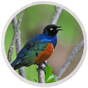 Superb Starling Round Beach Towel by Tony Beck