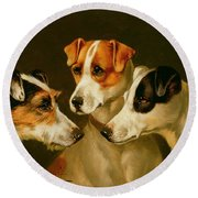 The Hounds Round Beach Towel by Alfred Wheeler