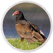 Turkey Vulture Round Beach Towel by Robert Frederick