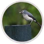White-eyed Slaty Flycatcher Round Beach Towel by Tony Beck
