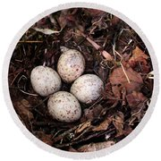 Woodcock Nest And Eggs Round Beach Towel by Angie Rea