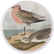 Red-breasted Sandpiper  Round Beach Towel by John James Audubon