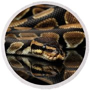 Ball Or Royal Python Snake On Isolated Black Background Round Beach Towel by Sergey Taran