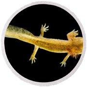 California Giant Salamander Larva Round Beach Towel by Dant� Fenolio