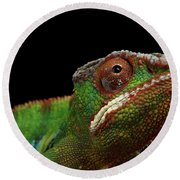 Closeup Head Of Panther Chameleon, Reptile In Profile View Isolated On Black Background Round Beach Towel by Sergey Taran