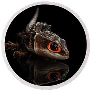 Closeup Red-eyed Crocodile Skink, Tribolonotus Gracilis, Isolated On Black Background Round Beach Towel by Sergey Taran