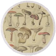 Edible And Poisonous Mushrooms Round Beach Towel by French School