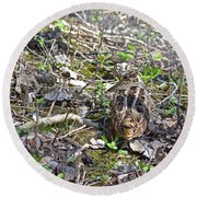 Eye-contact With The American Woodcock Round Beach Towel by Asbed Iskedjian