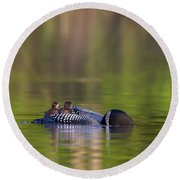 Loon Chick Yawn Round Beach Towel by John Vose
