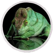 Parson Chameleon, Calumma Parsoni Orange Eye On Black Round Beach Towel by Sergey Taran