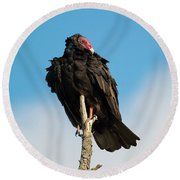 Looking For A Meal Round Beach Towel by Mike Dawson