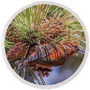 Red Crossbill Round Beach Towel by Michael Cunningham