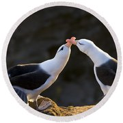 Black-browed Albatross Couple Round Beach Towel by Jean-Louis Klein & Marie-Luce Hubert