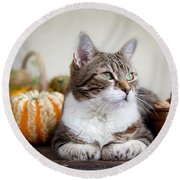 Cat And Pumpkins Round Beach Towel by Nailia Schwarz