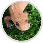 Spring Salamander Round Beach Towel by Ted Kinsman