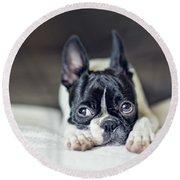 Boston Terrier Puppy Round Beach Towel by Nailia Schwarz