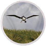 Black-browed Albatross Round Beach Towel by Jean-Louis Klein & Marie-Luce Hubert