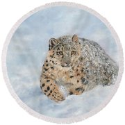 Snow Leopard Round Beach Towel by David Stribbling