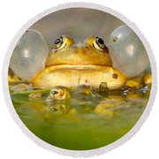 A Frog's Life Round Beach Towel by Roeselien Raimond