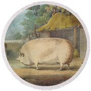 A Leicester Sow Round Beach Towel by William Henry Davis