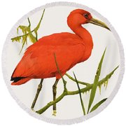 A Scarlet Ibis From South America Round Beach Towel by Kenneth Lilly