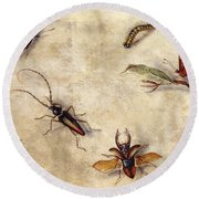 A Study Of Various Insects, Fruit And Animals Round Beach Towel by Jan Van Kessel the Elder