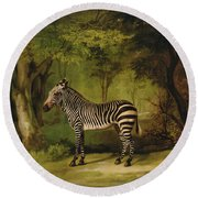 A Zebra Round Beach Towel by George Stubbs