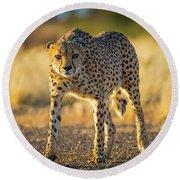 African Cheetah Round Beach Towel by Inge Johnsson