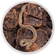 African Rock Python Round Beach Towel by John Cancalosi