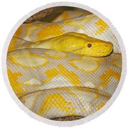 Albino Reticulated Python Round Beach Towel by Gerard Lacz