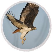 Augur Buzzard Buteo Augur Flying Round Beach Towel by Panoramic Images