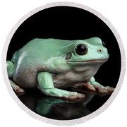 Australian Green Tree Frog, Or Litoria Caerulea Isolated Black Background Round Beach Towel by Sergey Taran