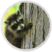 Baby Raccoon In A Tree Round Beach Towel by Dan Sproul