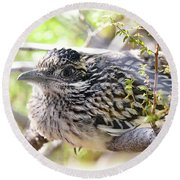 Baby Roadrunner  Round Beach Towel by Saija Lehtonen
