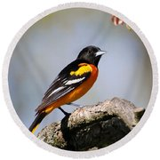 Baltimore Oriole Round Beach Towel by Christina Rollo