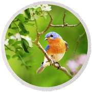 Beautiful Bluebird Round Beach Towel by Christina Rollo